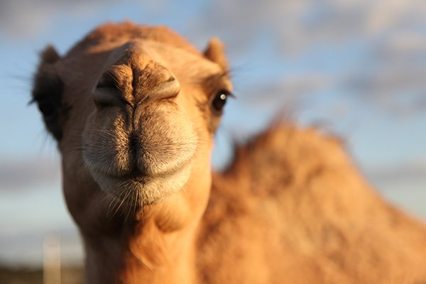 QCamel Ethics